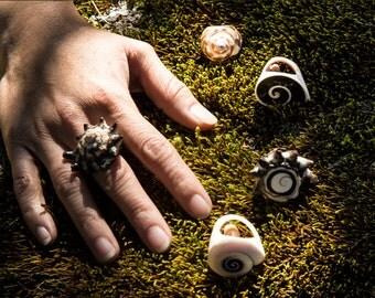 Seashell ring / ring of natural snail