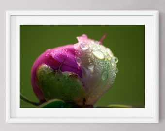 """Printable Floral Photography Pink Flower Macro Photograph Nature Botanical 8""""x12"""" Instant Download Wall Art Home Decor"""