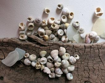 SALE! 101pcs Small Nerita Seasnails, Jewelry supplies, Beach craft supplies, Seashell art,Beach wedding,Coastal decor,Nautical decor #SH022#