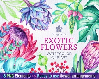 Exotic Protea flowers arrangements WATERCOLOR Clip Art. Tropical bouquet, green leaves, floral garland, wreath. 8 elements. Read about usage