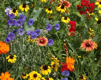 Southern Hills and Plain Flower Seed Mixture -  Large Pack