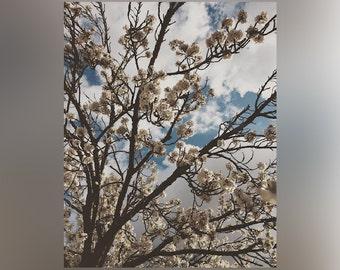 Cherry Blossom Tree - Print