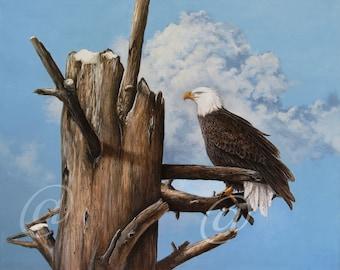 original oil painting, eagle, bald eagle, canvas, raptor, nature, bird, portrait, fine art, wildlife, framed, Jan Brown