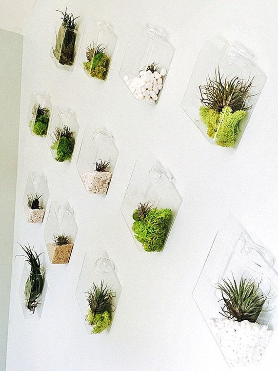 Set of 10 Rhombus Glass Wall Vase Indoor Wall Planters DIY