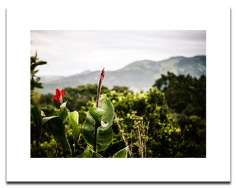 Red Flowers On Guatemala Mountian Lanscape | Fine Art Archival Photograph Mounted on Styrene | Ready to Frame | Mission Trip
