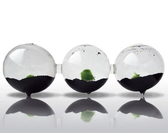 Marimo Moss Ball in Triple Terrarium, Marimo Moss Ball Home Decor, , Marimo Moss Aquarium