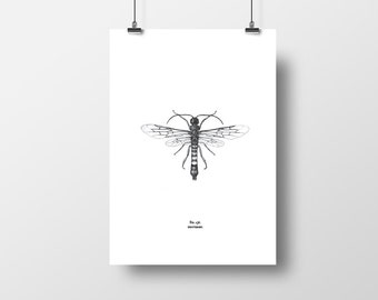 Asian Horntail Insect graphic print A4 (A3 also available)