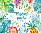Tropical Leaves. 44 Floral Elements, watercolor clip art, jungle, flowers, pineapple, cards, diy, invite, baby, colorful, art, leaf, foliage
