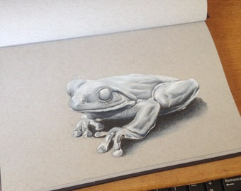 Stone Frog sketch