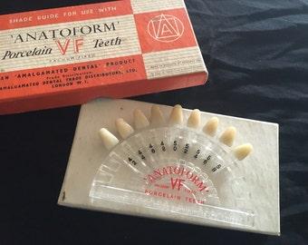 Vintage/antique Anatoform porcelain human teeth shade guide 1950s slide dental prop
