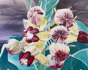 Asclepias Oil Painting