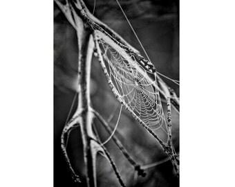 Spider Web Photo - Branch - Cobweb Photo - Cobweb Digital Photo - Black and White - Vertical - Digital Photo - Digital Download - Home Decor