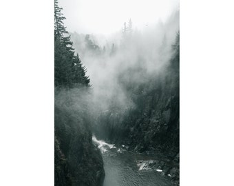 Fog Forest Photo - Evergreen Forest - Forest Digital Photo - Vertical Photo - Digital Photo - Digital Download - Instant Download - Wall Art