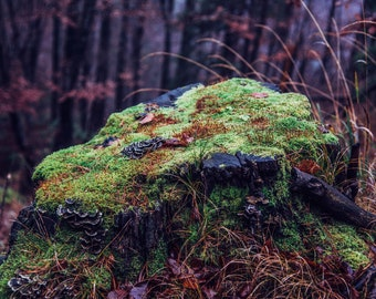 Moss Digital Photo - Forest - Nature Print - Nature Wall Decor - Forest Wall Decor - Digital Photo - Digital Download - Instant Download