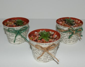 Succulents in Page Planters
