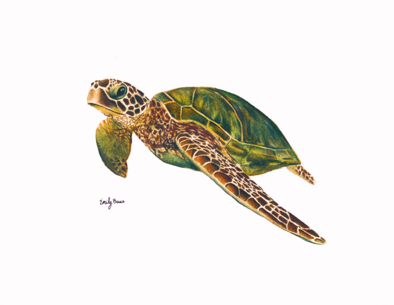 Sea turtle print 8x10 colored pencil Sea turtle art print Sea