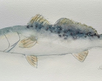 Speckled Trout No.2