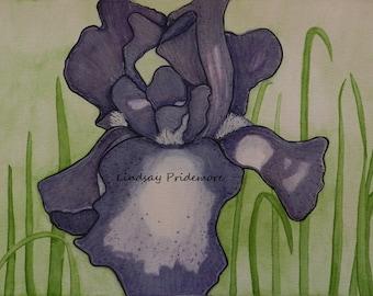 Purple Iris, Giclee, Painting, Watercolor Print, Floral