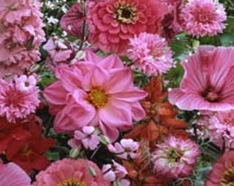 Pink Shades of Color Flower Seeds/Wildflower/Annual   75+