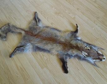 Coal red fox
