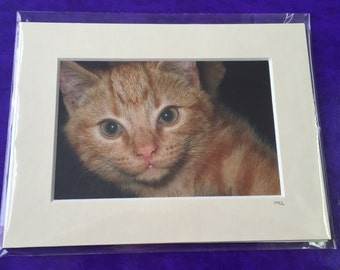 Mounted Ginger Cat Photo
