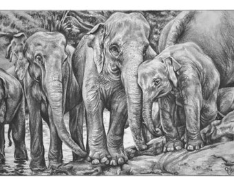 The Elephant Orphanage, Sri Lanka - Signed Giclee Print of Pencil Drawing