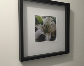 WHITE LILY - Original Photograph - Framed in Shadow Box