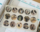 Your Photo's as Custom Stickers! Round 1inch stickers.