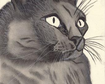 Great charcoal drawing of a cat. Digital print.