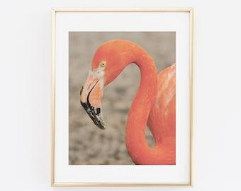 Flamingo Photograph Print, Printable Wall art, Animal Home Decor Print, Flamingo Pink Print, Modern wall Art, Contemporary photograph Print