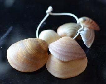 Charm Shell 1