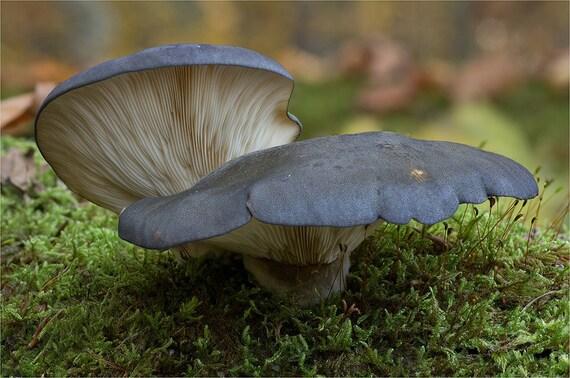 how to make mushroom mycelium