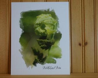 Fiddlehead Fern Art Print