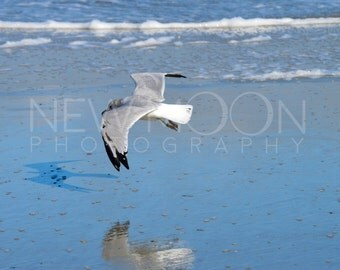 Seagull on Tybee Island wall art-Print