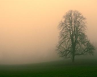 Fog photo, tree, Digital photo, instant download, printable, fine art photography, foggy landscape, art print, background, fall