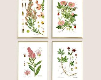 Wall art print decor set of 4 flowers print floral print antique botanical print wild plants print illustration print poster pink green A4