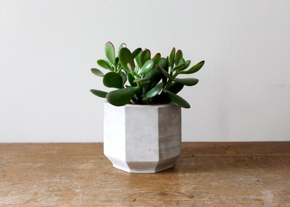 Large Octagonal Concrete Planter Perfect For A Cactus Or