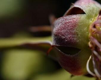 G34 - Rose Exposed Closer