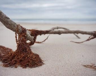Entangled  //  Bribie Beach  // Australia
