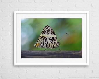 Butterfly Art Photo Framed