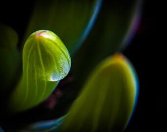 Macro photography - lush succulent