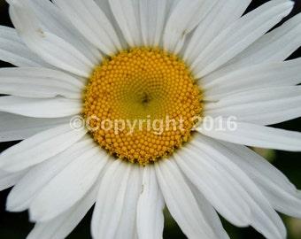 Flower Print (21cmx29,7cm)