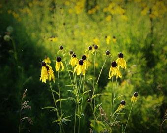 Yellow Coneflower Nature Print