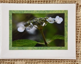 Lace Top Hydrangea note card
