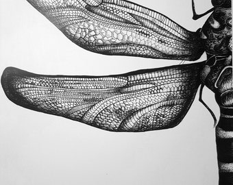 The Dragonfly black ink drawing print artwork