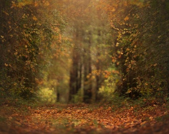 KCC Fall Digital Background/Backdrop - Instant Download