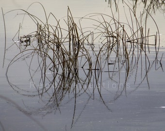 Reed Reflections #10
