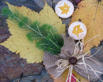 White Spruce seedling, Wedding Favour