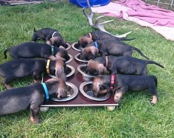 6 Puppy Bowl food bowl of dog intelligence