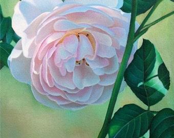Blush Pink Rose portrait original oil painting 5x7 by Leslie Macon